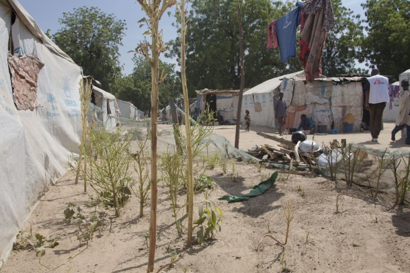 MSF, Doctors Without Borders, Nigeria, Borno State humanitarian crisis