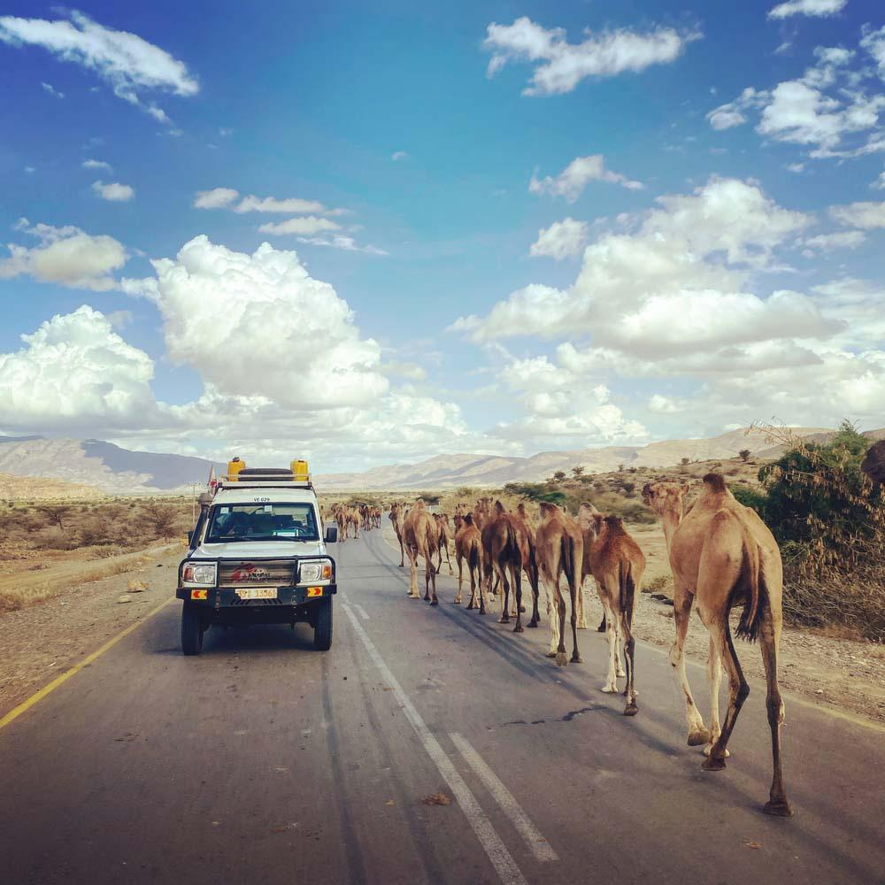 MSF car passing camels in Ethiopia Tigray region